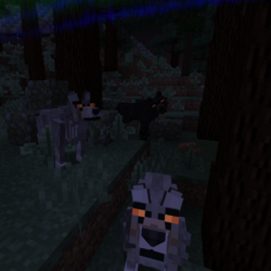 Feral Wolf