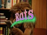 Episode 51: Rats!