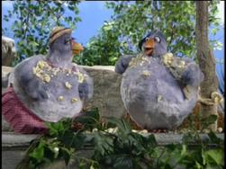 Fat pigeons.png