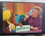 Dr. Ruth Wordheimer Parakeet 3