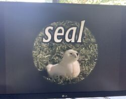 Moby Duck Beasley the really white seal.jpg