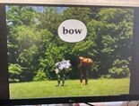 Gawain's Word Bow 2
