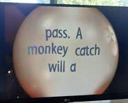 Swami Marmy A Monkey Will Catch A Pass