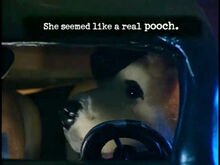 Sam spud mistaken about precious being a pooch.jpg