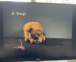 Albrecht Roser, the Pup and the Bug.jpg