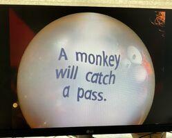 Swami Marmy A Monkey Will Catch A Pass 2.jpg
