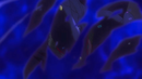 Beyblade Burst God Twin Nemesis 3Hit Jaggy avatar 5