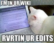 Kot na Wikipedii