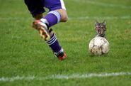 Kot piłkarski