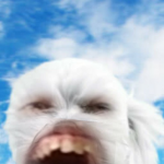 Galaxy doshik's avatar