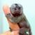 MonkeyMan10
