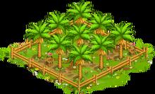 1 Orchard Basic tropicalFarmCoconutOrchard3 Orchard.png