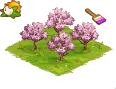 Free range cherry orchard.png