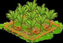 1 Orchard Basic tropicalFarmBananaOrchard3 Orchard.png