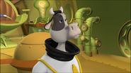 CowCaptainUnimpressed