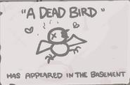 A Dead Bird Geheimnis