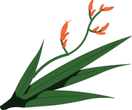 Harakeke kasvi