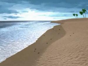 Papa Nihu Reef Shore.png
