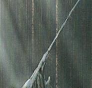 Stone Cord