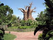 3231606 Baobab1