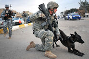 American Military Police