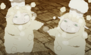 Sheep Cook