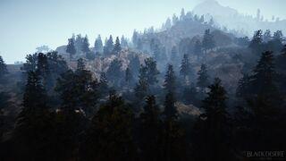 Tungrad Forest.JPG