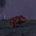 Bear necessity.png