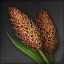 Icon for Sorghum.