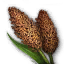 Gather Grain Sorghum.png