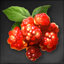 Icon for Raspberry.