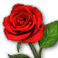 Icon for Red Rose.