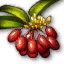 Quest Cornus berry.png