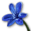Grocery blue east flower.png