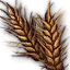 Gather barley of Jaeryonglim.png