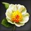 Icon for Yulan.