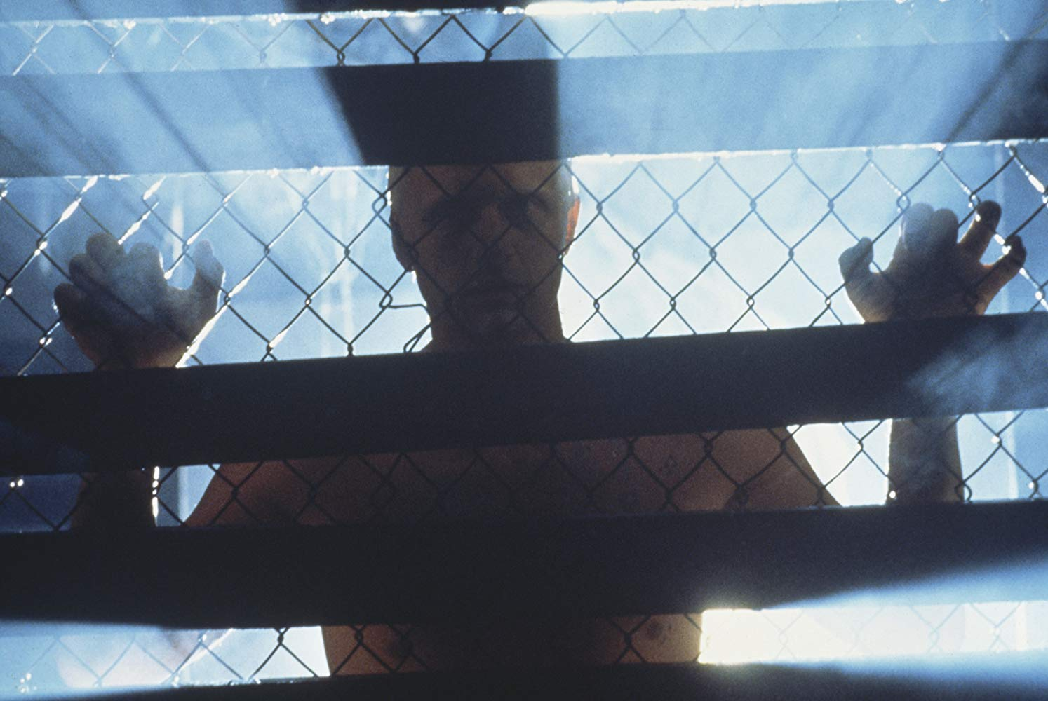 Roy standing behind a fence.jpg