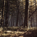 Blair Witch (Game) Locations