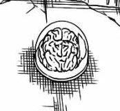 Otak Gremmy.jpg