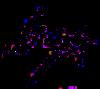 Lisa's Signature.PNG