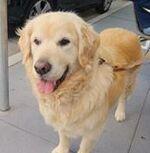 Rosé's dog Max