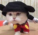 Lisa's cat Tiga