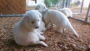 Lil puppiesss
