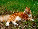 Complete Fan Book of Cat Breeds in Warriors