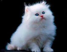 Cat 8.jpg