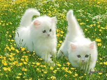 Cute cats yas.jpeg