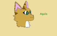 Aquila by dove