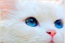Whitecats1.jpg