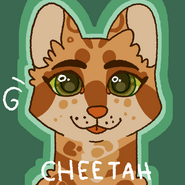 It cheetah by kat