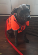 Boo in his raincoat